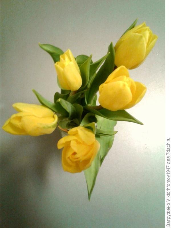 Поздравляю женщин с праздником весны!Желаю здоровья и удачи!