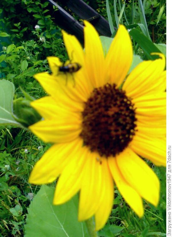 Удлинённые жуки с жёлтыми крыльями в чёрных пятнах.Кто это и как к ним относиться?Весной их бывает очень много,особого вреда я не наблюдал или не замечал,но знать нужно.