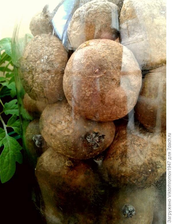 Картофель в банке,верхний без ростков.