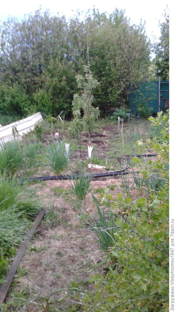 Колоновидный садик5яблонек и 3 груши.В глубине ёмкость солидных размеров для купания и запас воды.