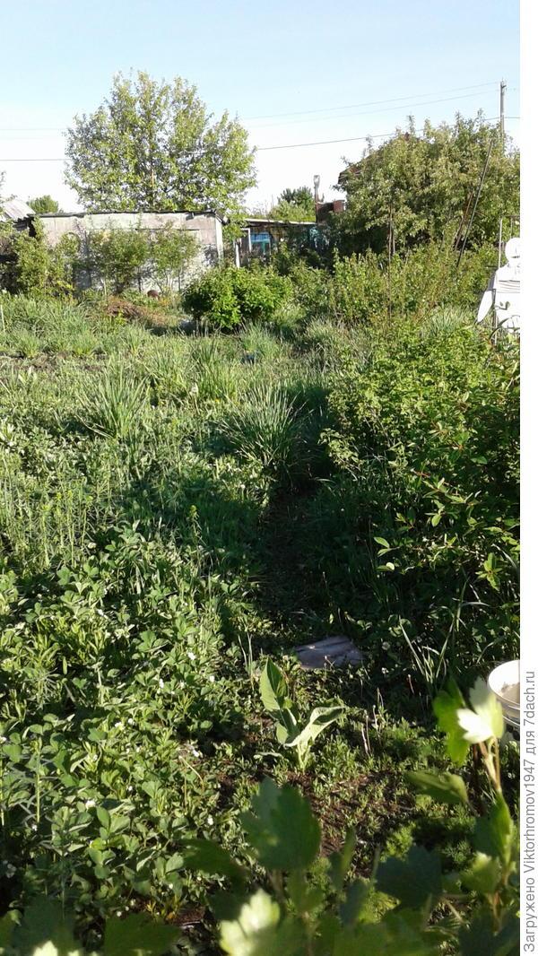 Правая сторона участка слева клубника справа ряд кустарников жимолость,красная смородина,войлочная вишня и без шипный шиповннник.Между ними тропинка быстрее всего зарастает.