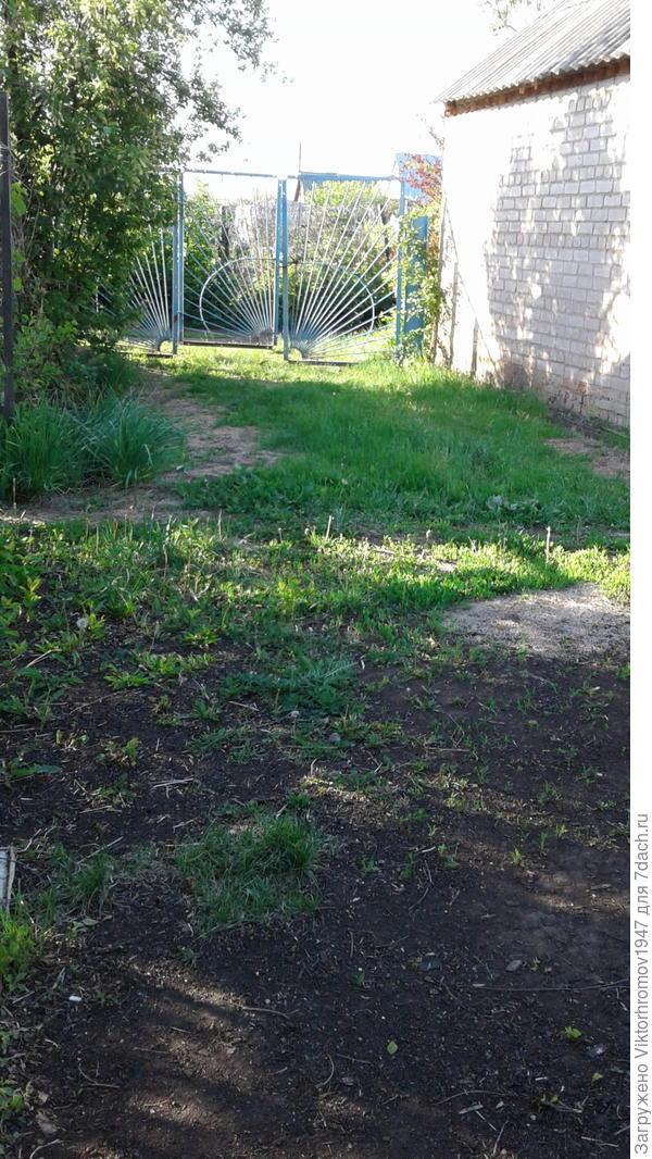 Большая лужайка с газонной травкой для игр и с площадкой с барбекушницей