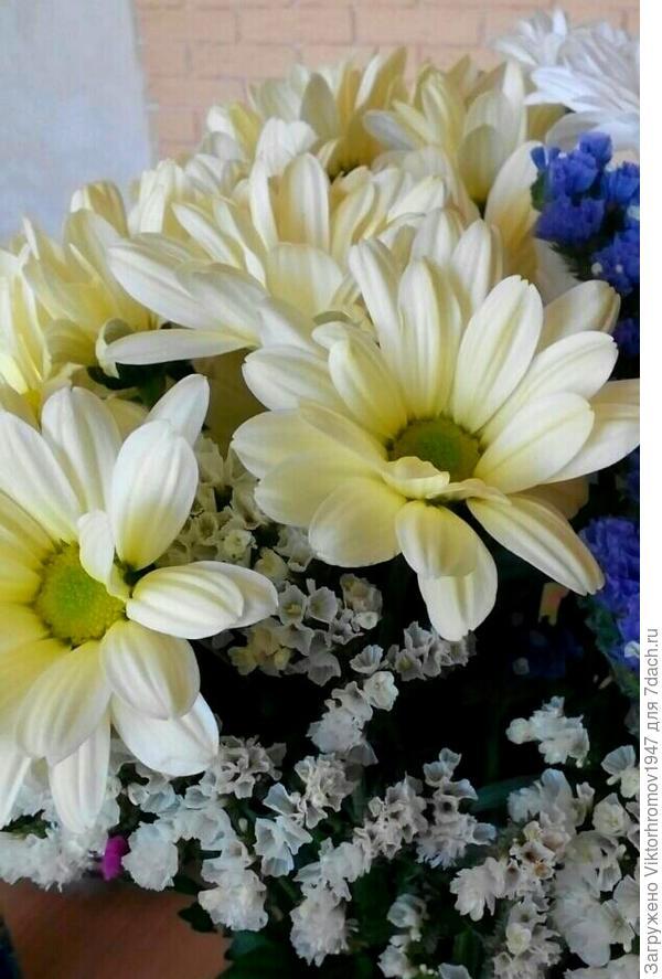 Букет цветов и поздравление с началом учебного процесса всем мамам, папам,дедушкам и конечно главным учителям Бабушкам. Начинаем учиться!