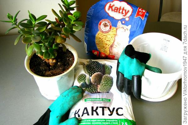Приготовили  всё для пересадки. Новый горшочек,грунт для посадки, дренаж и главное это уже любимые рукавицы с клыками фирмы Garden Genie Gloves.