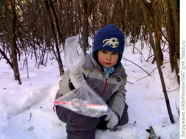 Стали искать: по карте прошли 4 дерева прямо, затем 3 дерева на лево. Нашли то дерево внимательно осмотрели, но подарка не было...Пришлось рыться в глубоком снегу. Долго искали и вдруг Тимофей радостно крикнул: есть!...и достал из снега пакет.