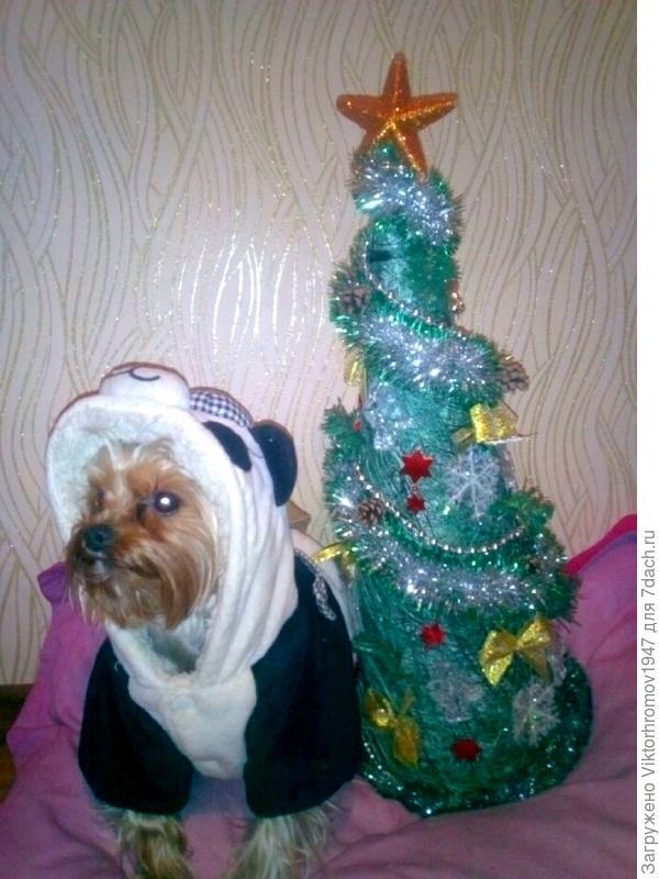 """А когда подарили настоящую Шубу, поняла, что я действительно """"Настоящий повелитель года!"""" Собака хороший подарок настоящему мужчине!!!  Поздравляем Всех с Новым 2018 годом!!!"""