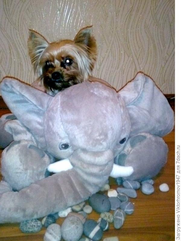 Подарил мне игрушечного слонёнка, а он больше меня в 10 раз, но на нём и спать удобно и с высока всё видно.