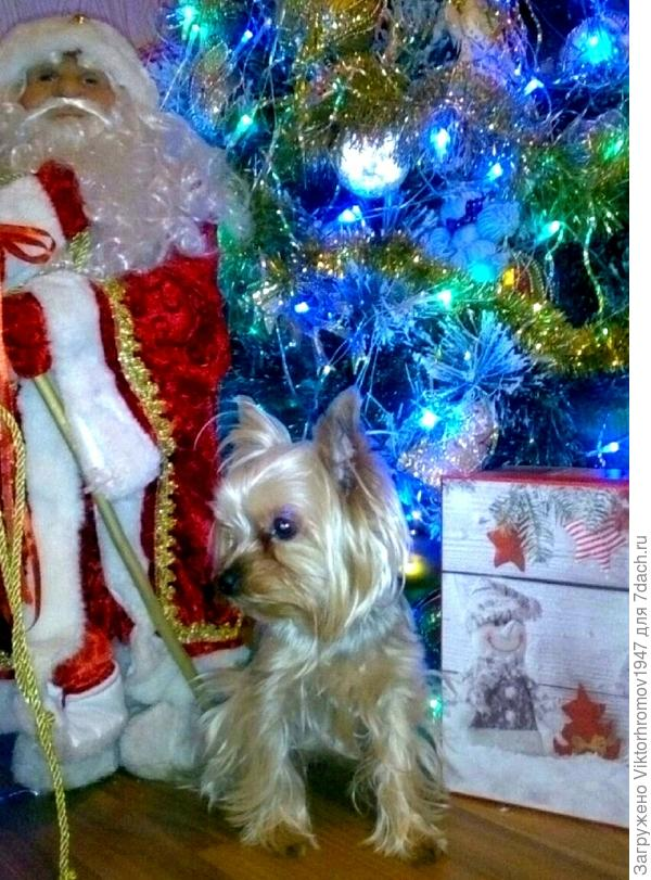 А вот мысли самой героини: Мне очень понравилось, как встретил Тимофей. Сфотографировал с Дедом Морозом под ёлочкой.