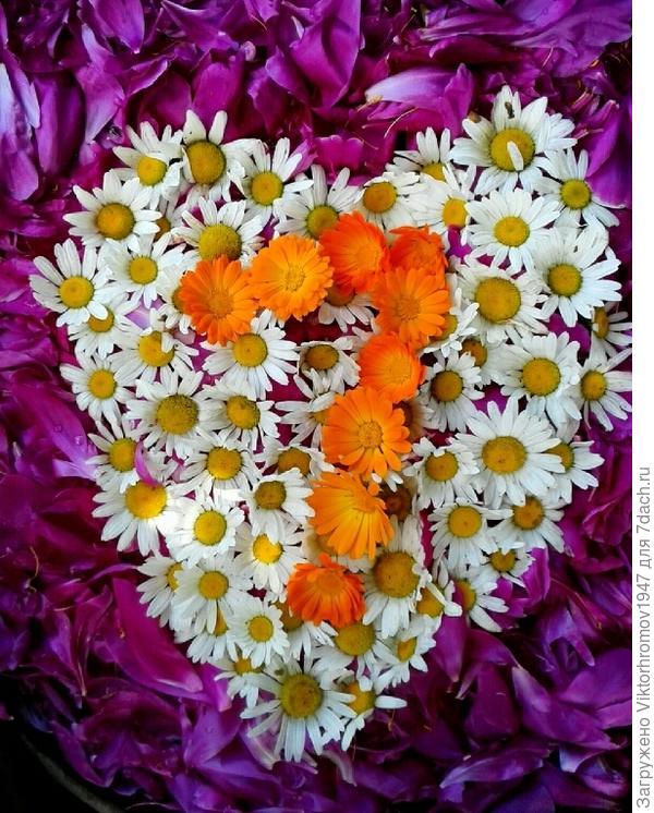 Валентинка оздоровительная из листьев пиона, медицинской ромашки, календулы и нашего Семидачного настроя!!!