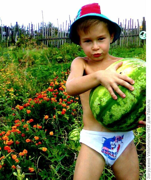 Конечно первую ягоду доверили сорвать внуку.