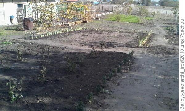 Слева дом индоуток, а вдоль забора растет виноград. До бочки (которая справа на фото) будет цветник, далее-огород, а за ним (на фото плохо видно) фруктовый сад.