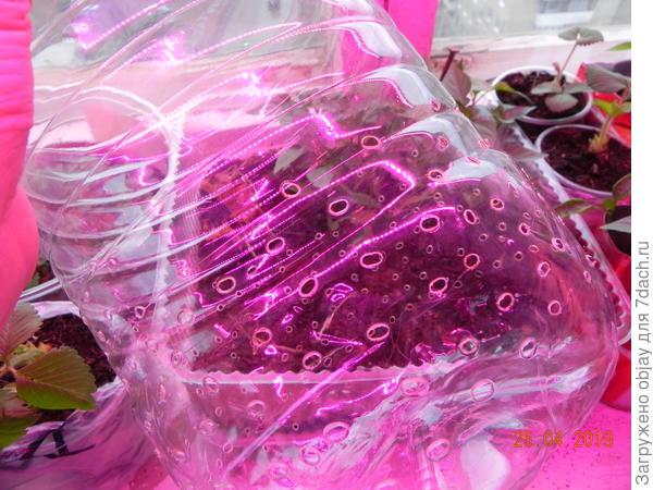 Посадка огурцов в пластиковые бутыли