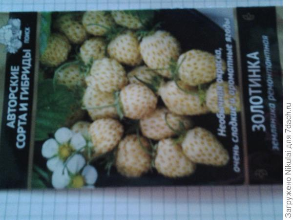 Агрофирма Поиск,купила недели 2 назад.Пишут,что она безусая,плодоношение  с весны до заморозков.ягоды среднего размера.