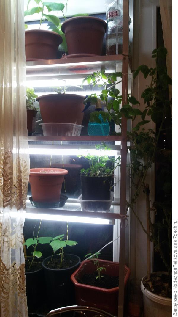 стеллаж для рассады на окне