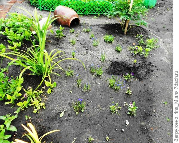 Высадила рассаду