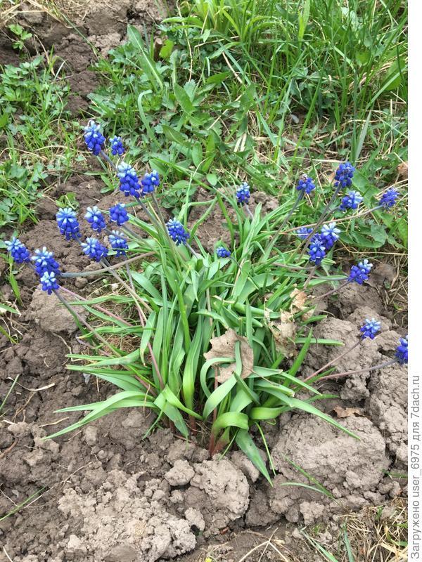 Скажите пожалуйста, как называются эти цветочки