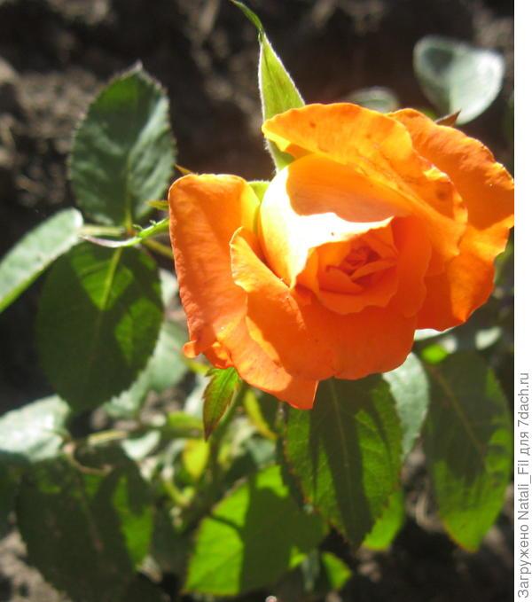 Изумительный цвет
