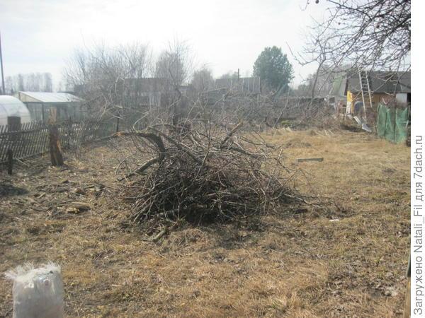 Начали с очистки участка. Вырубили старые яблони-дички, убрали все старые кусты