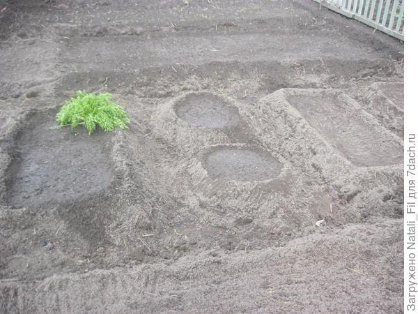 Посадила лук, чеснок яровой, посеяла морковь, свеклу и другие культуры.