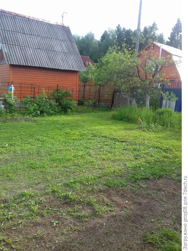 вид на будущий густой газон :)