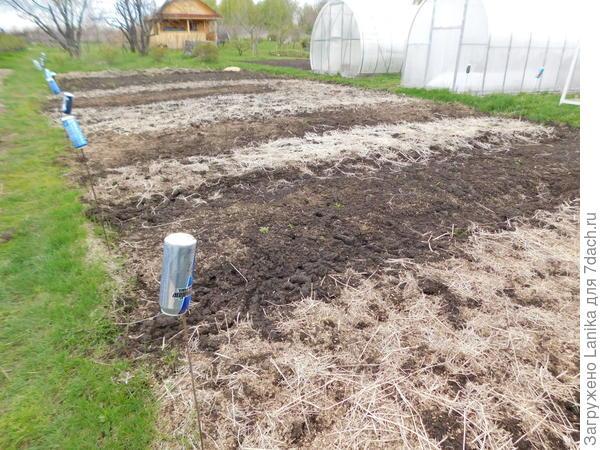 Светлые участки - это как раз остатки горчицы. Это не мульча, это кошачьи слезы. Но после заделки плоскорезом в землю послужит улучшению структуры почвы.