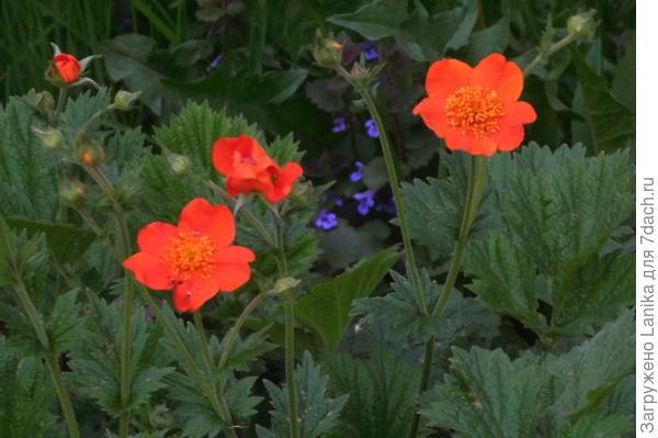 Кстати, как этот цветочек называется, не знаете?