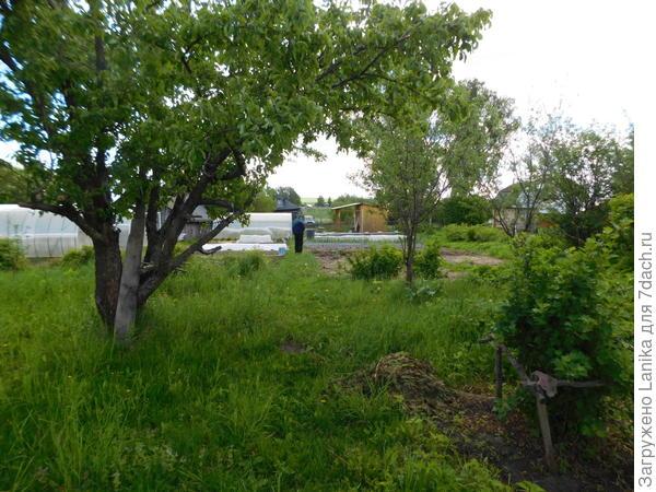 Вид на огород из сада. Сюда руки пока не дошли, даже трава пока не скошена...
