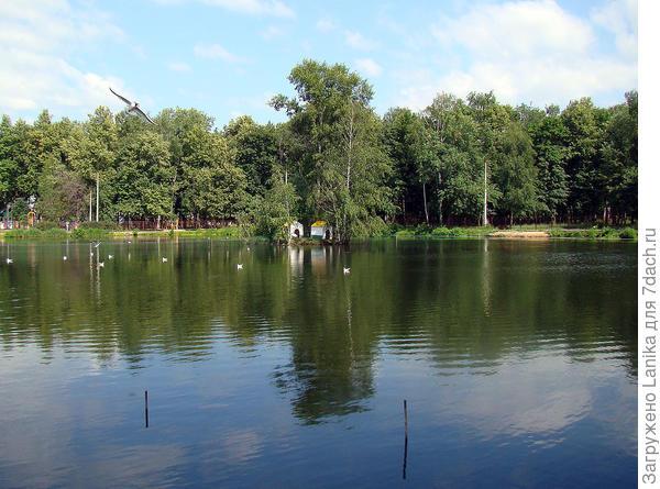 А вот это наше лебединое озеро.