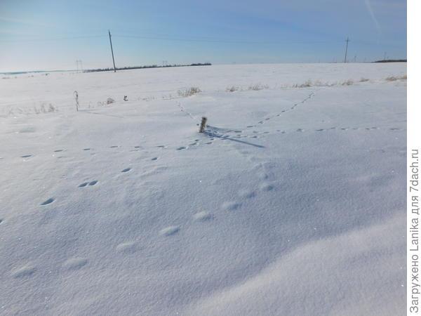 А это в поле рядом с дорогой такой перекресток у сосенки, высунувшей лапку из-под снега, тропок любопытных зверьков...