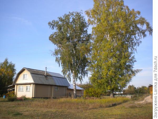 Вот наши березки, дом не наш. У нас огород пострадает, если туда упадут. А хозяева дома жалеют очень эти деревья, а может вкладываться не хотят...