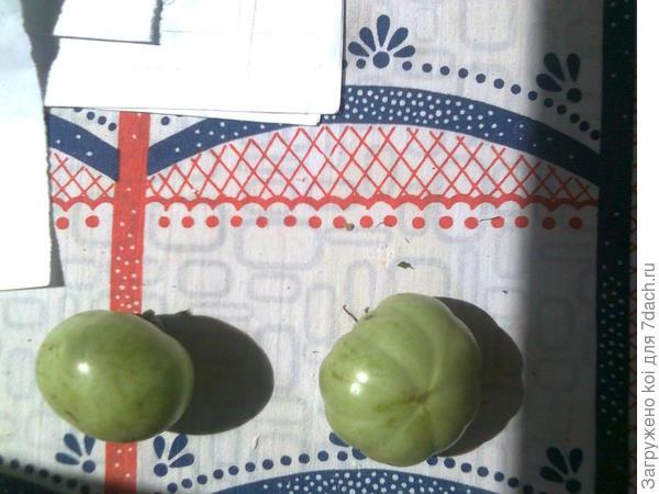 пятнышки на плодах