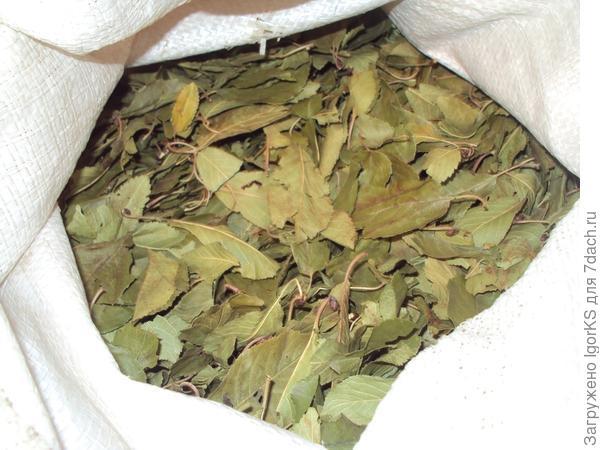Листья плодовых деревьев и сушеные яблоки можно заготовить самому, на даче их достаточно