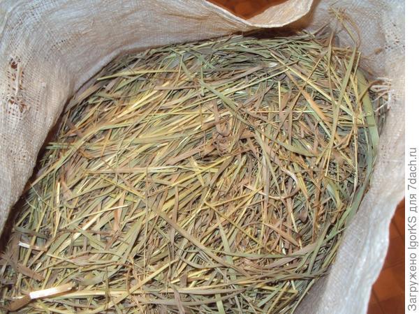 Шиншиллы очень любят ароматное сено...