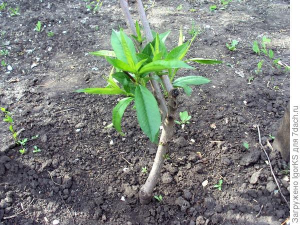 Листья приобрели насыщенный зеленый цвет