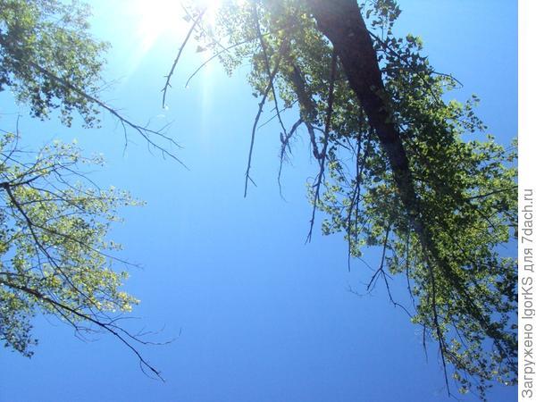 Каждый день над ним безоблачное небо