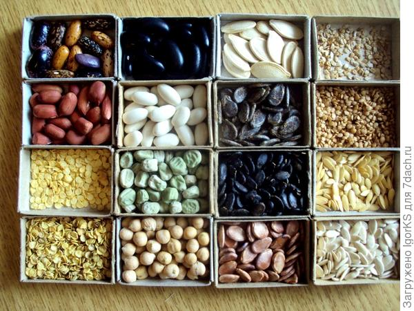 Домики с семенами