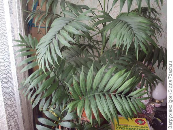 У родителей домашнее растение дало семена (слева снизу). Уже взял))), надо посадить.