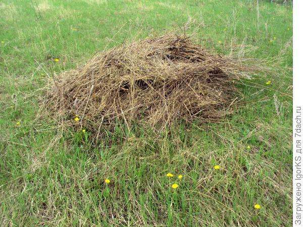Сухую траву можно аккуратно собрать граблями