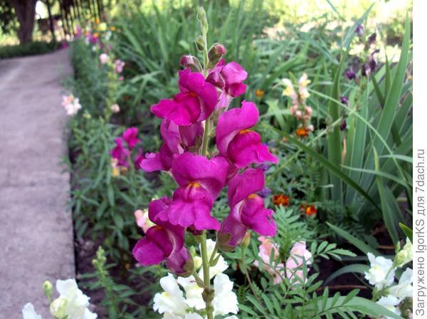Каждый цветок по-своему прекрасен