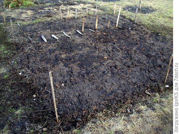 Место посадки церциса (и не только) весной