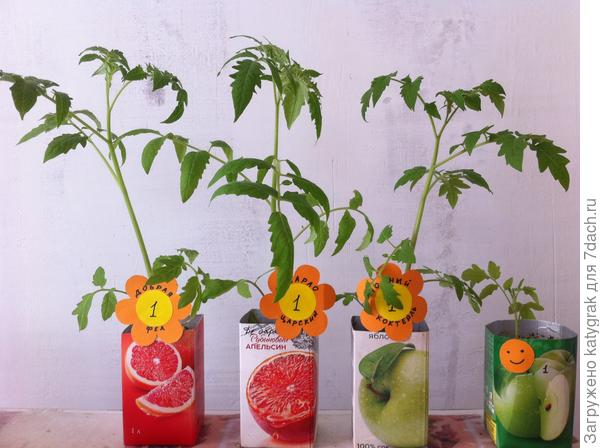 Тестируемые томаты