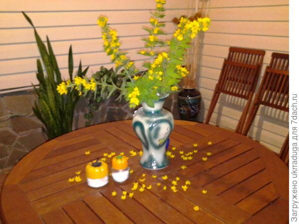 цветок у меня давно а в срезку поставила только в этом году- понравилось,весёлый букет.