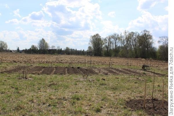 На новом участке в первый сезон удалось освоить совсем немного земли под огород.