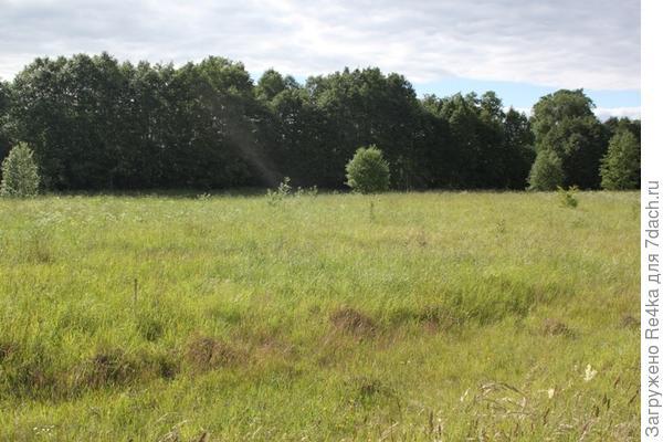 Таким мы увидели участок впервые - голое поле.