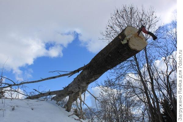 Сначала нужно свалить дерево.