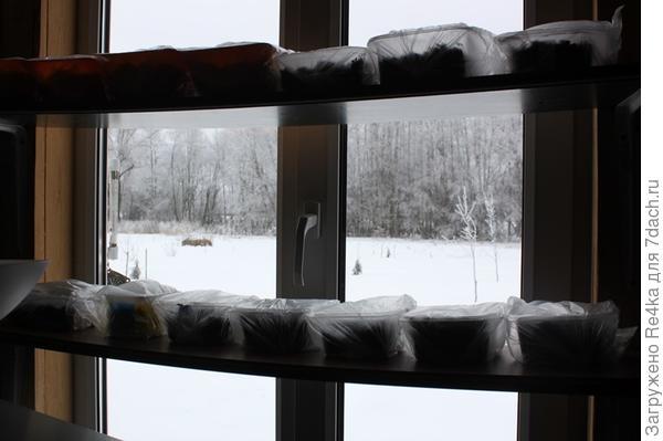 Полки для рассады на окне.
