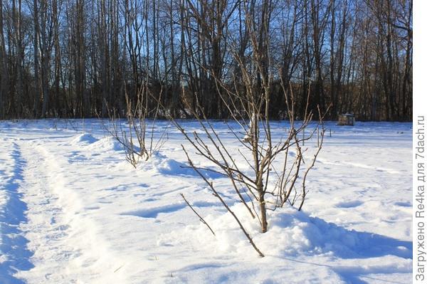 Снега очень мало в этом году. Вернее, он успел стаять. Остатки превратились в наст. Пришлось соскребать по чуть-чуть с наста.