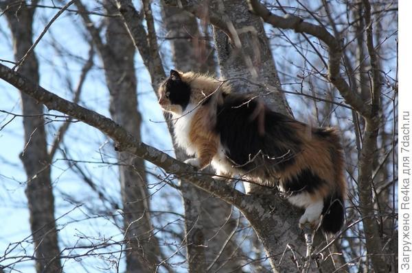 Лазание по деревьям
