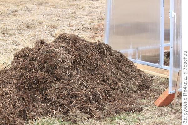 Это не навоз, это трава. Позапрошлой осенью, когда было намечено место для будущей теплицы, стала сваливать туда всю многолетнюю скошенную и убранную с участка траву. Таким образом, полтора года копилась эта мульча. Сейчас, вынесла её из теплицы и готовлю там грядки. Сорняки практически все перепрели, осталась самая малость. Этой мульчей затем закрою помидоры.