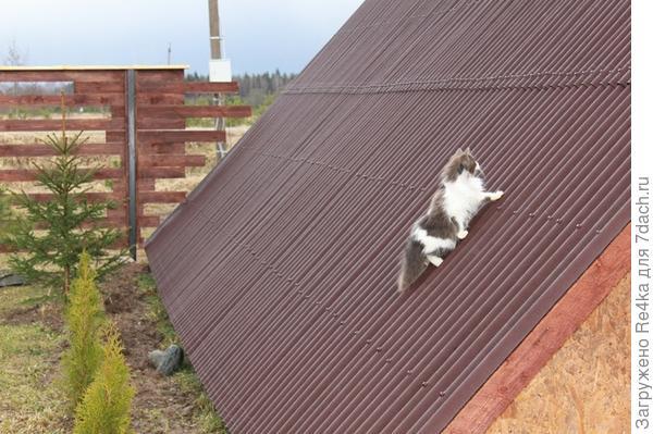 Немного апрельских кошек....